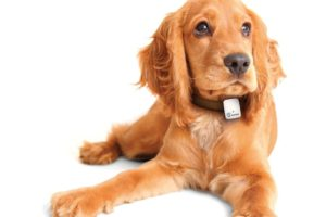 Tractive GPS Pet Tracker - best gifts for mothers day