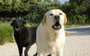 barking dogs help with home security