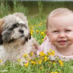 Best Baby Gates with Pet Doors